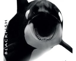 Critique DVD : Blackfish documentaire sur les orques en captivité, disponible le 1er juillet